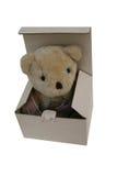 棕熊孤立 免版税库存照片