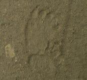 棕熊脚印 图库摄影