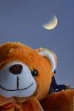 棕熊; 与减少的月亮的l 图库摄影