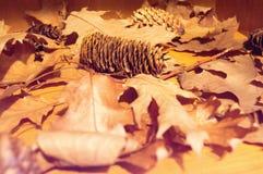 棕色下落的秋叶围拢的冷杉球果 免版税图库摄影