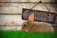 棕色兔子侧视图的综合图象  免版税库存照片