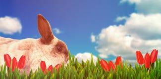 棕色兔子开会侧视图的综合图象  图库摄影