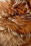 棕色发光的毛皮纹理  绿色和平的概念 穿外套的拒绝 免版税库存照片