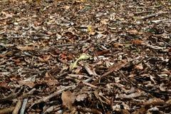 棕色叶子地板  免版税图库摄影