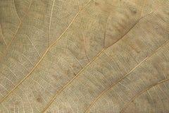 棕色叶子背景纹理的图象是干燥的 免版税库存照片