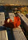 棕色叶子 免版税库存照片