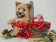 棕色圣诞节逗人喜爱的小狗 图库摄影