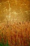 棕色域老墙壁麦子 免版税库存照片