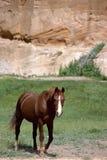 棕色峭壁前面马粉红色犹他 免版税库存照片
