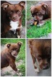 棕色拼贴画狗照片 库存照片