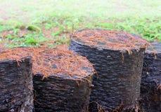 棕色松树树叶子关闭  免版税库存图片