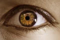 棕色极其眼睛宏指令 库存图片