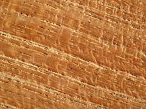 棕色柚木树木头 免版税库存图片