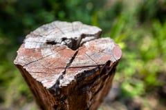 棕色树桩特写镜头有被弄脏的绿色背景 免版税库存图片