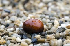 棕色栗子特写镜头照片与说谎在sto的雨水滴的 免版税库存照片