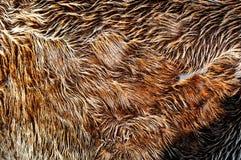 棕色毛皮 库存图片