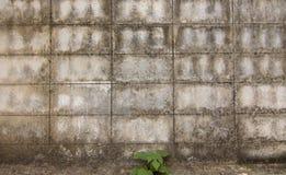 棕色水泥墙壁背景  免版税图库摄影