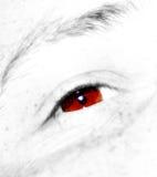 棕色深眼睛 库存图片