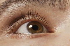 棕色特写镜头眼睛人s 库存图片