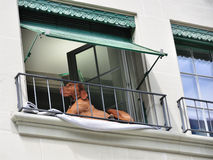 棕色狗位于的窗台 免版税库存图片