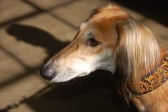 棕色狗光 免版税图库摄影