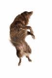 棕色狗 免版税库存图片