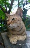 棕色猫的懒惰天在公园 免版税库存图片