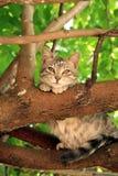 棕色猫眼一点 库存照片