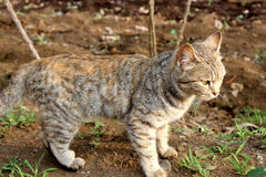 棕色猫重点例证爱 库存照片