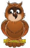 棕色猫头鹰 库存图片