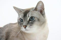 棕色猫 库存图片