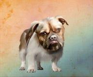棕色目的狗画象  免版税库存图片