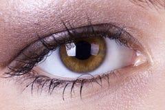棕色眼睛妇女 免版税图库摄影