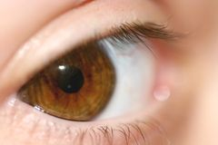 棕色眼睛宏指令 库存照片