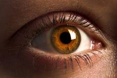棕色眼睛 免版税库存照片