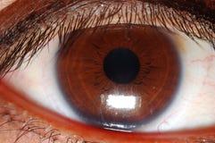 棕色眼睛 库存照片