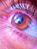 棕色眼睛 免版税库存图片