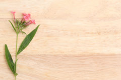 棕色纸板的芬芳桃红色巴拿马罗斯 平的位置春天fl 免版税库存照片