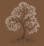 棕色结构树 免版税库存图片
