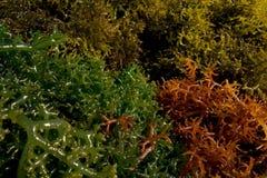 棕色绿色红色海草 免版税库存照片
