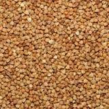棕色荞麦谷物 免版税库存图片