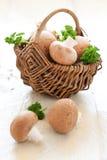 棕色蘑菇 免版税库存照片