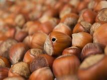棕色螺母 图库摄影