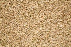 棕色谷物媒体米 免版税库存图片