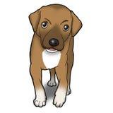 棕色逗人喜爱的小狗 库存图片