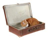 棕色逗人喜爱的老手提箱Tomcat 免版税图库摄影