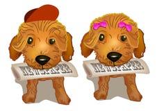 棕色长卷毛狗 库存照片