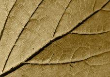 棕色页结构树 库存照片