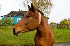 棕色颜色一匹美丽的马在一条路的在农场的乡下 库存照片