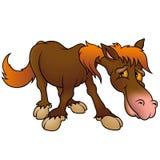 棕色马 库存图片